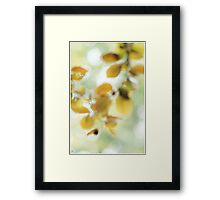 Impressionist Copper Beech.. Framed Print