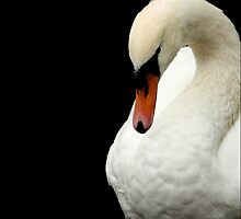 Swan Portrait by AlysonArtShop