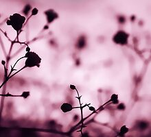 raspberry pink by Ingz