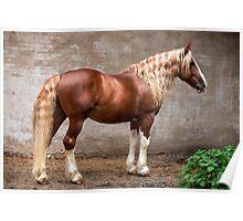 Mostik - Russian Heavy Horse Stallion Poster