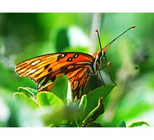 Butterfly face Photographic Print