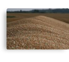 Grain Canvas Print