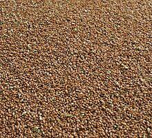 Grain by fotorobs