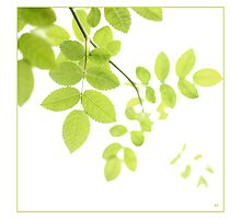 Green Leaves by AlysonArtShop
