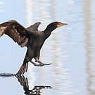 Double-crested Cormorant by Alinka