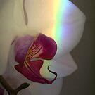 Rainbow light by FelicityB