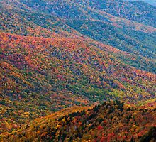 Nature's Canvas - Great Smoky Mountains National Park, TN by Matthew Kocin