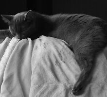 Sleep by Tracy Faught