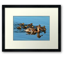 Mother Mallard & Babies Go For A Swim Framed Print