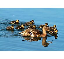 Mother Mallard & Babies Go For A Swim Photographic Print