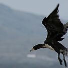 Come to me Cormorant!! by mrsjaques