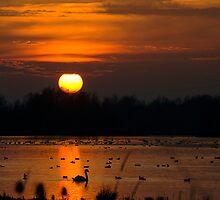 Summer Leys Sunset, Northamptonshire, UK by strangelight