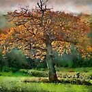 Tree in Autumn, Somerset, UK by buttonpresser
