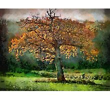 Tree in Autumn, Somerset, UK Photographic Print