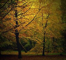 Golden Autumn Colours by Chris Goodwin