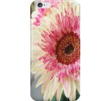 Pink Gerber Daisy iPhone Case/Skin