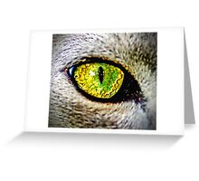 Stare Greeting Card