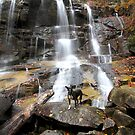 Fall Creek Falls by Chris Snyder