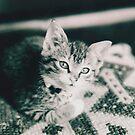 Kitten by joerelic37
