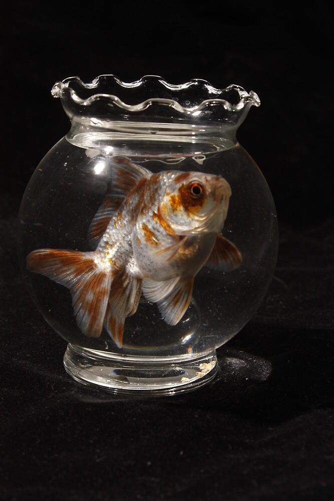 Big Fish Small World by BFinn