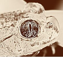 Spade foot Toad Photographic Print