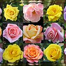 Gallery of Roses by Kathryn Jones