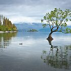 Wanaka Duck by Neville Jones
