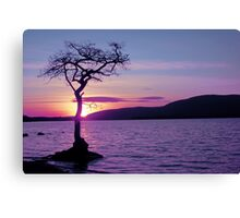 Don't let the Sun go down on Tree. Canvas Print