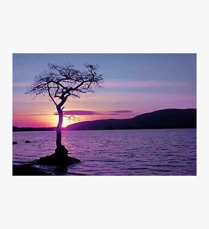 Don't let the Sun go down on Tree. Photographic Print