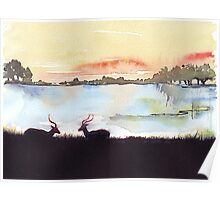 Impala in an African landscape Poster
