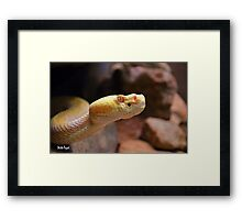 Albino Rattlesnake Framed Print