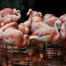 Pink Flamingo by Mattie Bryant