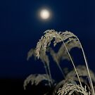 November moonrise. by bberwyn