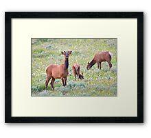 Velvet Spike Bull Framed Print