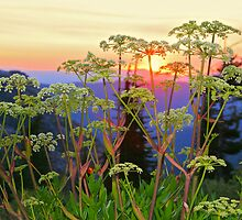 Water Hemlock by John Butler