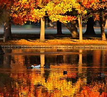 Reflection of Fall by Barbara  Brown