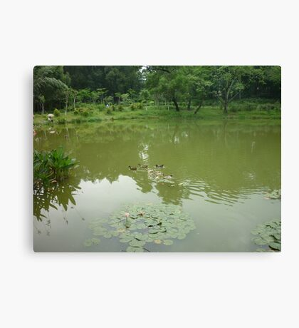 Going For a Morning Swim Canvas Print