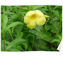 A yellow trumpet in the morning Poster