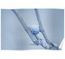 Grape/Vine Poster