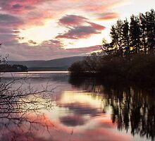 A Calm Morning by Lynne Morris