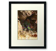 Mandarinfish Framed Print