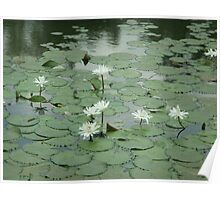 Dance of the water lilies Poster