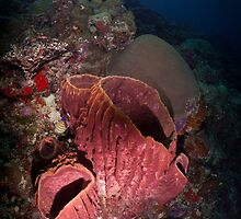 Sponge Diver by Fatfish Photography