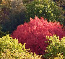 Tuscan fall tree by bertipictures