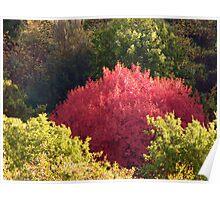 Tuscan fall tree Poster
