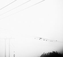 Blackbird on a Wire by Rory Garforth