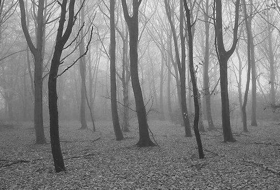 The mist by Stephanie Owen