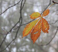 Solitary leaf by Stephanie Owen