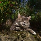 Chilled cat by turniptowers