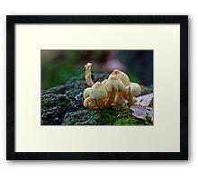 Fungi No1 Framed Print